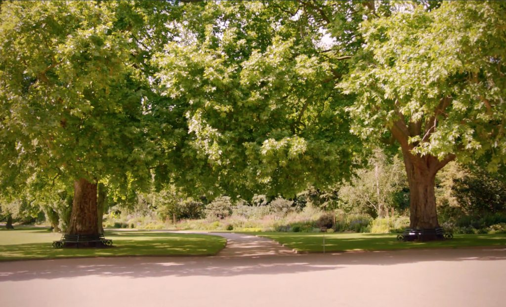 Queens Green Planet - trees at Buckingham Palace. Photo copyright ITV, reused with permission
