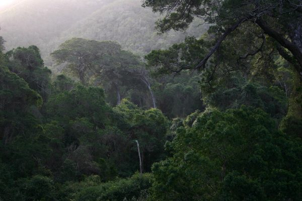 The Knysna and Tsitsikamma Forests of the Garden Route National Park
