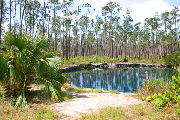 Blue Hole Conservation Forest