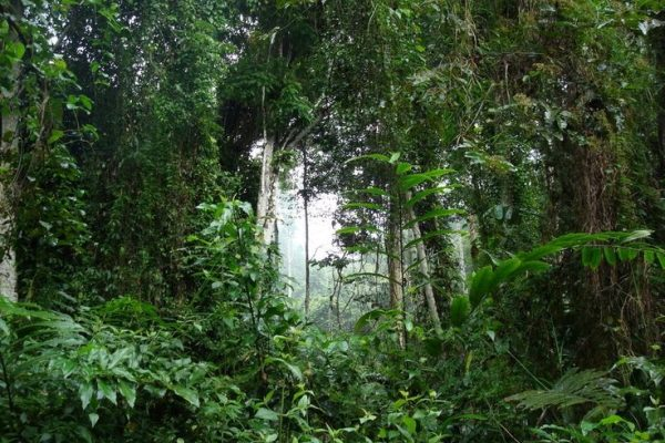 Sangmelima Training and Research Forest